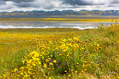 Wildflowers and Soda Lake (Mimi Ditchie) Tags: california carrizo carrizoplain carrizoplainnationalmonument landscape lake sodalake wildflowers clouds