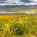 Wildflowers and Soda Lake