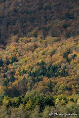 Autumn in forest (darko.jakovac) Tags: nikon d750 nikond750 sigma 150600 sigma150600 contemporary telephoto dolenjska slovenija slovenia slowenien discover explore trip travel traveling relax view viewpoint ngc outdoor outdoors outside hiking adventure perspective activities roam visit environment explorers ecological nature landscape scenery scenic idyllic beauty beautiful season seasonal unique perfect superb magnificient stunning impressions outstanding popular perfection colors colorful postcard wallpapper countryside rural autumn fall natural green