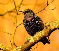 Birdie,birdie. (alex.vangroningen) Tags: bird tree brabch beak forest wales outdoors details