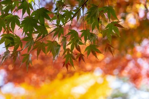 Leaves and bokeh