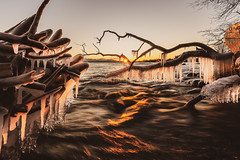 ebb and flow (Marc McDermott) Tags: winter sunset lakeontario cold freezing ice icicles shore fallen trees ontario canada