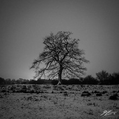 It Was Always Worth It (TVZ Photography) Tags: 11 square blackandwhite monochrome kneppcastle westgrinstead horsham westsussex sussex tree snow night evening longexposure lowlight sonya7riii zeiss loxia 21mm