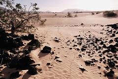 Fuerteventura_2019_05 (ichbinsEvi) Tags: fujifilmxt2 fujifilm sand beach dünen natur landscape spain fuerteventura corralejo