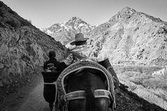 Mule ride through the Atlas mountains (stephenbarber) Tags: morocco vacation travel africa blackwhite nell mule hike mountain