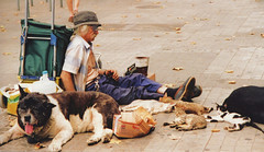 Together on the street (M McBey) Tags: man poor street dog cat poverty homeless destitute