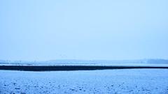 winterscape (Jos Mecklenfeld) Tags: winter snow schnee sneeuw forest wald bos nature natur natuur nulbos westerwolde sonya6000 sonyilce6000 selp1650 sonyepz1650mm niederlande nederland terapel groningen netherlands nl crows kraaien krähen landscape landschaft landschap