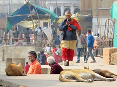 varanasi 2019 (gerben more) Tags: varanasi benares people dog streetscene streetlife street india