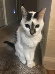 109/365/8 (f l a m i n g o) Tags: april 12th 2019 friday project365 365days morning cat pet animal angel cute 39283