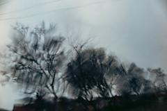 38/365 - Rain Man (efsb) Tags: 38365 project365 2019yip 2019inphotos rain glass windscreen blur