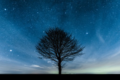 Tree under the stars (Andy barclay) Tags: tree trees field country side landscape nature land horizon astro astrology astrophotography stars star space galaxy milkyway night cold nighttime winter dark sky nikon d7100 sigma 1020mm wide long exposure