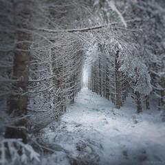 Deep in the Forest (M a r i k o) Tags: iphone iphonex iphoneography iphonephotography mobile mobilephotography mariko square forest woods trees wald snow schnee cold winter branches path snowscape hörlkofen wörth erding bayern bavaria germany hdr snapseed phototoaster