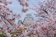 姬路城  ひめじじょう Himeji-jō , Japan (Vincent_Ting) Tags: 姬路城 ひめじじょう himejijō 日本 japan castle 城堡 冰庫縣 櫻花 cherry cherrytree cherryblossoms river 護城河 sky 天空 風景 landscape reflection 倒影 文化古蹟 日本三大名城 文化資產 世界文化遺產 旅遊名勝 touristdestination spring 春天 vincentting 日本關西 kansai