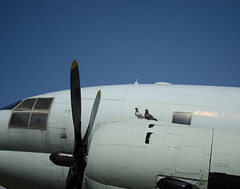 Seoul_04 (cam-pics) Tags: plane pigeons dslr doves itaewon korea seoul south südkorea war memorial museum flugzeug airplane airforce