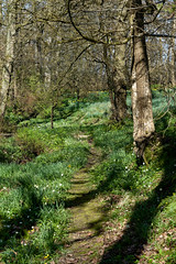 Vann Garden (tonybill) Tags: march sonya7riii sonyfe24105mmf4 spring sunshine surrey vann garden