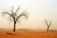 In The Desert (Alan1954) Tags: sossusvlei namibia desert namibdesert nature trees mist holiday 2018 africa platinumheartaward