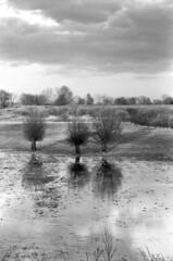 A Trip to Nowhere (czerwiony Smãtk) Tags: ilford ilforddelta100 perceptol żuławy analog analogue poland europa landscape tree flood clouds sunset willow reflection water grass shadows