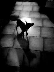 Dog (KnutAusKassel) Tags: bw blackandwhite blackwhite nb noirblanc monochrome black white schwarz weiss blanc noire blanco negro schwarzweiss