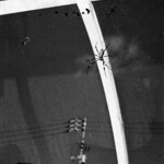 spiders thumbnail