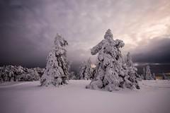 je ne m'en lasse pas ... (Manonlemagnion) Tags: paysage nature vosges neige hiver froid montagne blanc nikond810 1635mmf4 sapin