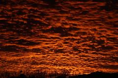 Sunset 11 29 18 #60 (Az Skies Photography) Tags: sun set sunset dusk twilight nightfall sky skyline skyscape rio rico arizona az riorico rioricoaz arizonasky arizonaskyscape arizonaskyline arizonasunset cloud clouds red orange salmon yellow gold golden black skyfire canon eos 80d canoneos80d eos80d canon80d november 29 2018 november292018 112918 11292018