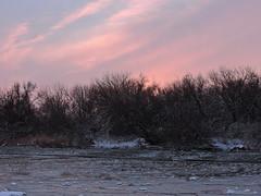 Отблески зимнего заката / Glares of winter sunset (Владимир-61) Tags: зима январь природа вечер закат река древья снег лед мороз небо облака winter january nature evening river snow ice frost cloud glare nikon coolpix p600 natureinfocusgroup