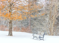 Seasons Change (Karen_Chappell) Tags: tree leaves orange bench winter snow weather snowy snowing outdoors nfld newfoundland stjohns bowringpark canada atlanticcanada avalonpeninsula eastcoast park january