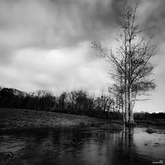 Quand fond la neige, où va le blanc ? (Un jour en France) Tags: monochrome canonef1635mmf28liiusm canoneos6dmarkii carré noiretblanc noiretblancfrance arbre tree trees rivière nuage nuageux