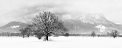 Lonely Tree Panorama, Bavaria (W_von_S) Tags: landscape landschaft panorama paysage paesaggio natur nature winterlandschaft winter winterpanorama snow snowlandscape snowscape tree baum lonelytree einsamerbaum highkey alpen alps mountains berge bavaria bayern germany deutschland sony sonyilce7rm2 blackwhite schwarzweis monochrome monochrom wvons werner outdoor wolken clouds januar january 2019 inntal innrivervalley skancheli