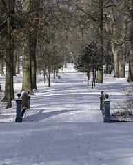 Winter2018-19_SAF1046 (sara97) Tags: cold copyright©2019saraannefinke missouri photobysaraannefinke saintlouis snow towergrovepark towergrovepark2019 winter winter201819 winterweather