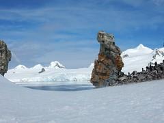 Oldest Living Things on Earth (Mulligan Stu) Tags: antarcticmoss antarctica elephantisland antarcticpeninsula chinstrappenguin