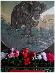 Prehistoric March (prima seadiva) Tags: artificial flowers mammoth shoe store udistrict sign