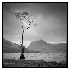 Buttermere_HP5-1 (D_M_J) Tags: buttermere lone tree lake district lakedistrict lakeland cumbria landscape north west film camera 120 medium format 6x6 square roll hasselblad 500 cm 80mm ilford hp5 plus 400 kodak hc110 epson v850 vuescan black white bw blackandwhite mono monochrome