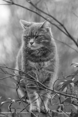 All Cats Are Grey (sdupimages) Tags: hmbt mbt monochrome pet chat cat winter grey