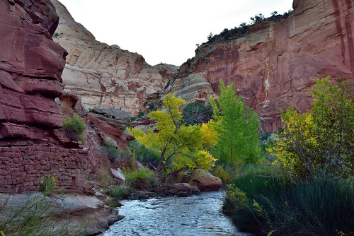 Standing on the Shores of the Fremont River with Towering Cliff Walls of the Waterpocket Fold All Around (Capitol Reef National Park)