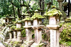 Moss (nigel@hornchurch) Tags: dsc0859 nara japan