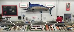 Massive plastic marlin (TheeErin) Tags: weylands counter fish market cbus columbus oh ohio indianola clintonville marlin animal sculpture seascape