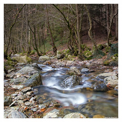 (Geert van Hurck) Tags: water trees nd110 slow ardennes ninglinspo slowwater tripod longexposure belgium nature