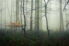 Welcome to the Thicket (Netsrak) Tags: baum bäume eu eifel europa europe forst landschaft natur nebel rheinland rhineland wald fog forest mist nature trees winter woods