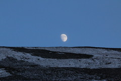 IMG_5326 (monika.carrie) Tags: monikacarrie wildlife scotland aberdeenshire royaldeeside