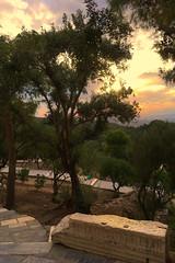 Acropole VI (Julien JUBIN) Tags: grece hellas athenes chemin couchersoleil sunset tree arbre