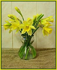 2019 ~ 21/365 (ttelyob) Tags: 365 21365 daffodils flowers yellow green signsofspring picmonkey