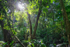 2019 Jungle (jeho75) Tags: sony ilce 7m2 zeiss jungle mexico mesoamerica palenque rain forest landscape nature green trees