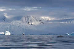 Charlotte Bay, Antarctica (LauriNovakPhotography) Tags: humpbackwhale whale antarctica oneocean igwhale charlottebay expedition mountain snow ice water clouds light iceberg tamron100400