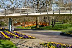 Stadtgarten (KaAuenwasser) Tags: stadtgarten zoologischerstadtgarten garten park anlage beet beete weg wege brücken brücke bepflanzung stiefmütterchen pflanzen blüten grün baum bäume frühling