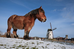 Damme Horse (Drummerdelight) Tags: gentlegiant horse low pov lowpov blackwhite damme