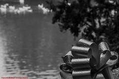 IMPROVISED SHOT RÍO TAJO ARANJUEZ-Madrid (FRANCISCO DE BORJA SÁNCHEZ OSSORIO) Tags: amor arrow autumn otoño aranjuez realessitios love light luz life lovely color colour composition composición colourtemperature bokeh beauty belleza blancoynegro blackandwhite b passion photo pasión primavera spring summer shot streetphoto street photostreet verano vida instant instante invierno winter nature naturaleza nice timeexposure tiempodeexposición temperaturadecolor detalles detalle detail details desenfoque disparo delicado divertido delicate dof depthoffield madrid moment españa exposure exposición encuadre exposicion