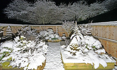 My garden on an early snowy morning. Please note the Olive trees looking sorry for themselves (Minoltakid) Tags: gb garden mygarden my little mylittlegarden raised raisedboarders plant plants snow winter wideangle wintertime winterwonderland febuary 2019 olivetree olivetrees trees tree acer woodblocx wooden fences fern ferns chimnea smallgarden evergreen weather coldweather deepbeds olivetreeinsnow cold towngarden theminoltakid minoltakid rossdevans rossevans ross frost illuminated