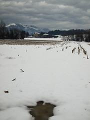 Neve (ccrrii) Tags: neve snow inverigo brianza co lombardia italia italy inverno winter