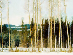 Snow scene of trees seen from the highway edited in the photo app Waterlogue (elizabatz.jensen) Tags: edited photoapp waterlogue winter snow bc canada trees